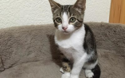 2chicco-gato-adopcion-madrid