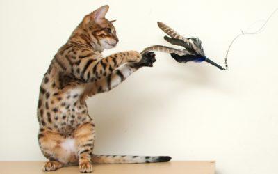 Tipos de juguetes para gatos