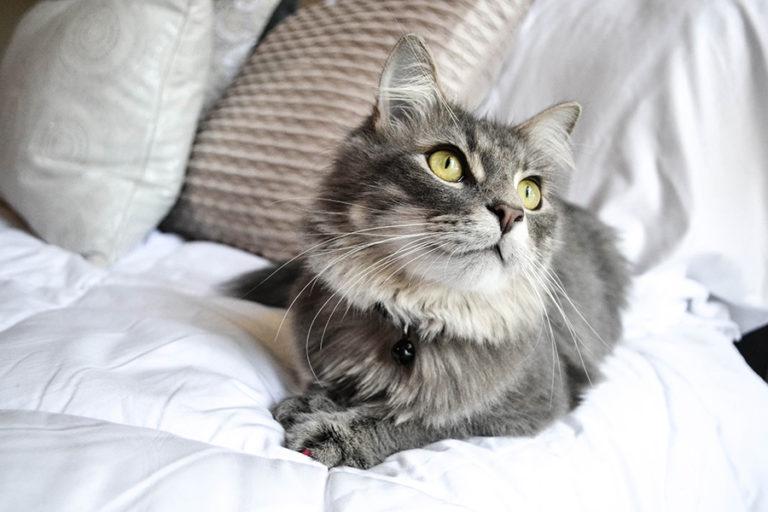 como-adoptar-gato-madrid
