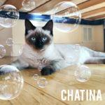 Chatina
